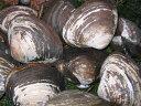 ホッキ貝1kg(3〜4玉)×2個(計2kg)北海道胆振沿岸産(ほっき 北寄)