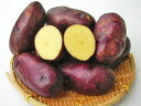 じゃがいも タワラマゼラン (M~L混)5Kg送料無料 北海道産 ジャガイモ生産元直送 同梱不可 9月中旬発送開始
