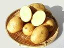 じゃがいも ながさき黄金 (M~L混)5Kg送料無料 北海道産 ジャガイモ生産元直送 同梱不可 9月中旬発送開始