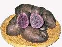 じゃがいも シャドークイーン(M〜Lサイズ混) 10Kg送料無料 北海道産 紫ジャガイモ生産元直送 同梱不可 9月中旬発送開始