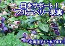 目をサポート♪加工や保存に便利な冷凍の北海道産ブルーベリーです。北海道産ブルーベリー冷凍果実 250g