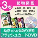 【クーポン有】フラッシュカードDVD ★動物図鑑 3巻セット★・鳥・昆虫・魚・野菜・果物