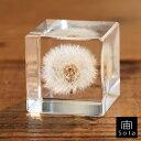 宙-sola- ソラ sola cube TANNPOPO タンポポ4cm角