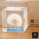 宙-sola- ソラ sola cube TANNPOPO タンポポ5cm角