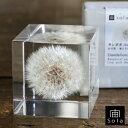 RoomClip商品情報 - 宙-sola- ソラ sola cube TANNPOPO タンポポ 5cm角 たんぽぽ
