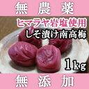 梅干し 無添加 無農薬 しそ漬南高梅 1kg ヒマラヤ岩塩使用 熊野のご褒美 ミネラル岩塩使用 酵素