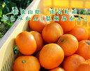 ゆらみかん 10kg温州みかん 和歌山県由良町産予約注文11月頃から出荷予定ご自宅用にもお歳暮などのギフト・贈り物にもおすすめです。彩り屋_