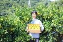 「ゆら早生」 みかん 10kg温州みかん「極早生」 和歌山県由良町産予約注文10月10日頃から出荷予定ご自宅用にもお歳暮などのギフト・贈り物にもおすすめです。彩り屋_