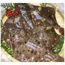 瀬戸内産・活メイタカレイ(5匹・約600g〜700g) 国産かれい/煮付け、唐揚げ用/鮮魚