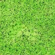 【期間限定 10%OFF】1m単位 生地 布 リアルPt オックス ぷらんぷ ちぃくす 芝生でゴロン H-3037-1-A25