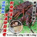 送料無料 刺身用冷凍伊勢海老 普通サイズ 1.25kg 5尾入  [伊勢海老] (活〆冷凍)