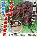 送料無料 刺身用冷凍伊勢海老 大きめサイズ 650g 2尾入  [伊勢海老] (活〆冷凍)