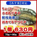 活き活き蝦夷アワビ 70g〜80g 1個[あわび]