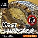 天然赤あわび(メガイアワビ)Mサイズ 180g〜220g 1枚[あわび]