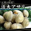 活大アサリ 1kg 6〜8個 [大アサリ]