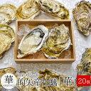 的矢牡蠣 殻付き Lサイズ20個入 送料無料 佐藤養殖場の滅菌技術で浄化した生食用牡蠣(冬季限定)