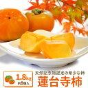 伊勢蓮台寺柿1.8kg【送料無料】天然記念物の柿 秋季限定 完熟柿