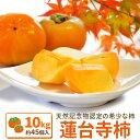 伊勢蓮台寺柿10kg 送料無料 天然記念物の柿 秋季限定 完熟柿
