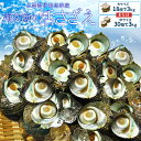 三重県伊勢志摩産海女漁の天然活さざえ3kg 送料無料 サザエのサイズと個数が選べます 父の日 ギフト