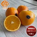 【期間限定】王様のオレンジ 88玉サイズ ケース 88個 入 新発売