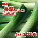 国産長葱(Mサイズ) 4kg