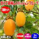 【送料無料】一番おいしいNO.1パッションフルーツ「ミズレモンの苗」(トケイソウ・ラウリフォリア)【9cmポット苗お買い得2個セット】ポット苗なのでほぼ年中植付け可能。トケイソウの仲間の中で最もおいしい実と言われ、果実は大変甘くほとんど酸味を感じません。