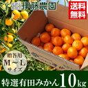 ガイアの夜明けで伊藤農園が紹介! 創業115年の柑橘専門・伊藤農園から有田みかんをお届け!農薬使用量通常の50%以下の特別栽培。
