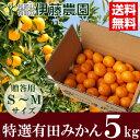 伊藤農園 特選有田みかん MS 5kg 送料無料 【内祝い・お返し・ギフト・贈り物・詰め合わせ