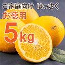 ガイアの夜明けで伊藤農園が紹介!創業118年の柑橘専門・伊藤農園からお届け!