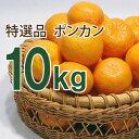 創業118年の柑橘専門・伊藤農園からお届け!