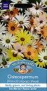 【輸入種子】Mr.Fothergill's SeedsOsteospermum Limpopo Mixedオステオスパーマム・リンポポ・ミックスミスター・フォザ...