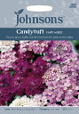 【輸入種子】Johnsons SeedsCandytuft ...