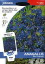 Anagalis Blue Pimpernelアナガリス・ブルー・ピンパーネルの種