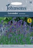 【輸入種子】均整のとれた美しさ!Johnsons SeedsLavender Dwarf Munstead strainラベンダー・ドワーフ・ムンステッドの種