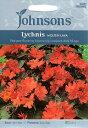 【輸入種子】Johnsons SeedsLychnis Molten Lava リクニス・モルテン・ラヴァジョンソンズシード