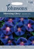 Johnsons SeedsMorning Glory Grandpa Ottsモーニング・グローリー(西洋朝顔)・グランパ・オッツの種