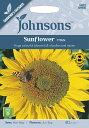 【輸入種子】Johnsons SeedsSunflower Titanサンフラワー(ひまわり)・タイタンジョンソンズシード