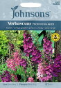 【輸入種子】Johnsons SeedsVerbascum ...