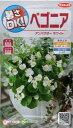 【種子】ベゴニアアンバサダーホワイトサカタのタネ