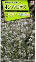 【種子】オンファロデス リトルスノーホワイトタキイのタネ