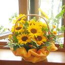 元気いっぱいの夏の贈りものに!かわいいヒマワリに思わず笑顔♪≪送料無料!≫旬のお花をたっ...