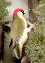 ヨーロッパアオゲラ KOSEN(ケーセン社) 27cm Eurasian Green Woodpecker/鳥/ぬいぐるみ