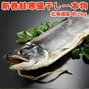 新巻鮭寒風干し一本物【約2キロ】 送料無料!化粧箱入