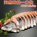 天然時鮭一本物 姿切り【約2.3キロ】送料無料・化粧箱入