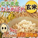 【送料無料】【メール便】2019年 岩手県産 丸麦(大麦)【900g】