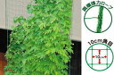 第一ビニール サイドロープ付 緑のカーテンネット
