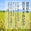 近江米 玄米 30kg きぬひかり 滋賀県産 キヌヒカリ 30キロ 白米 精米 可能 訳あり 数