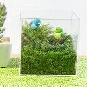 苔テラリウム キット 小鳥のさえずり LEDライト付き 癒し空間 おうち時間 子供 小学生 自然 手作りキット 孫 コケテラリウム コケリウム コケ 作成キット