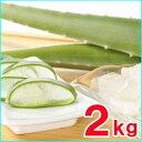 食用アロエベラ生葉 約2,5kg(2〜3枚)