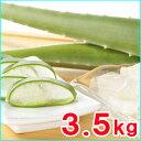 食用アロエベラ生葉 約3,5kg (3枚〜4枚)